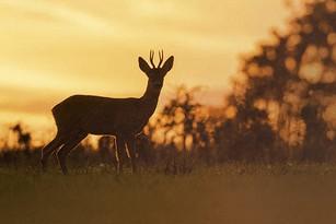 best rangefinder for deer hunting